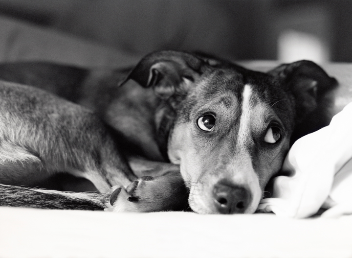 Canine anxiety and food intolerance
