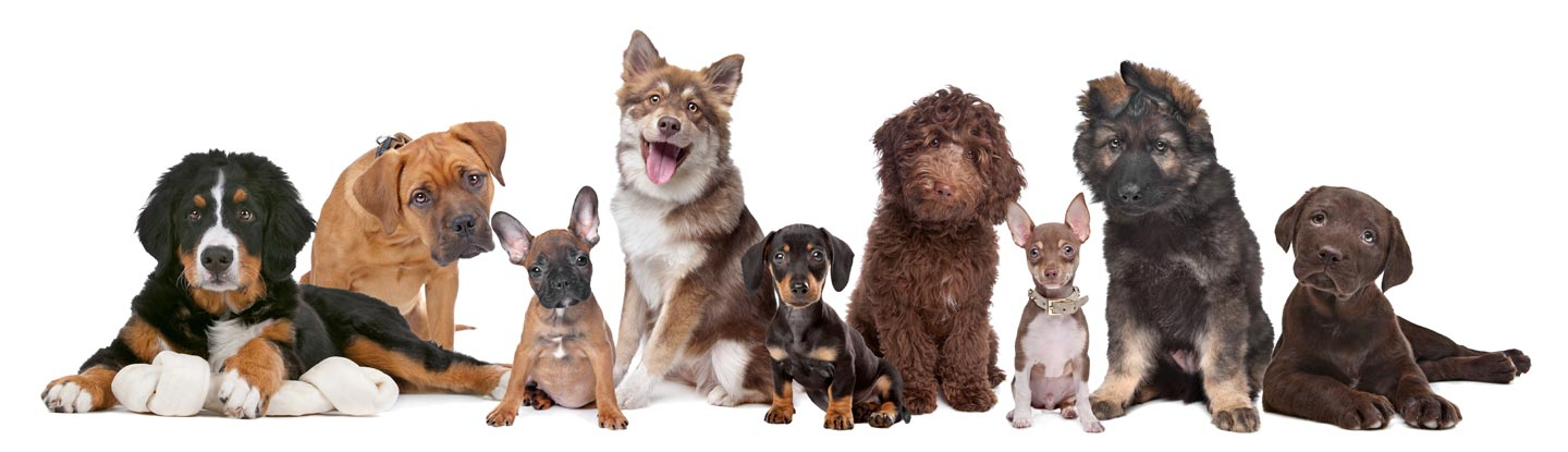 Watch The National Dog Show Online