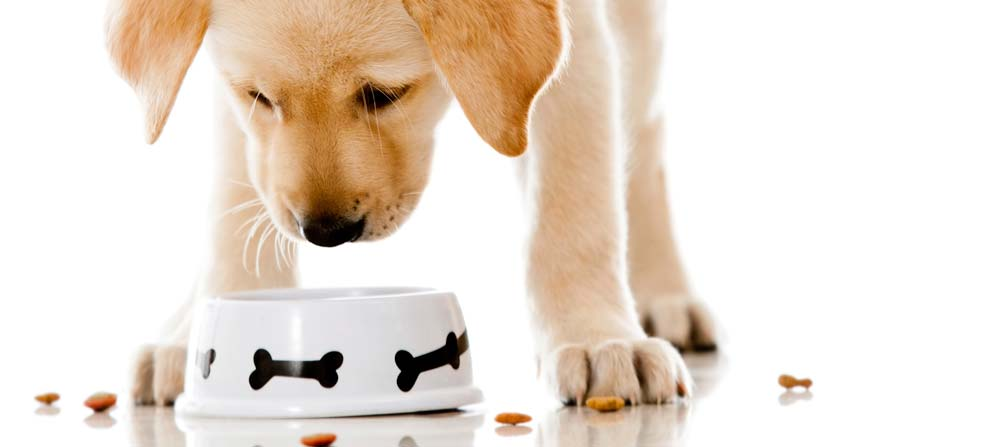 Why dog food matters