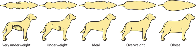Image result for overweight dog guide